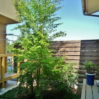 中庭/コンパクトだが美しい緑が目を楽しませる中庭。写真左がお母さまの個室、写真右手に娘さんの個室がある