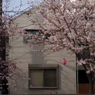 外壁は押し出し成型セメント版。爽やかなグレーは桜の木に美しく映える。