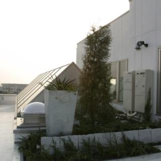 6階自宅 屋上庭園/植栽は手入れがほとんどいらないものを選び、自動散水システムも導入。多忙で手入れの時間がとれなくても緑のある暮らしを楽しめる。美しい三角形のガラスは4階~5階の吹抜けのトップライトとしての役割があり、明るい自然光を4階の撮影スタジオに届ける
