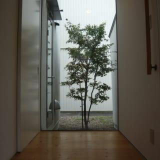 玄関ドアを開けるとまず目に飛び込んでくる坪庭のもみじ。四季を感じられる演出だ