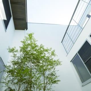 中庭から上空を望む。写真の正面方向に隣家がある。右上が2階のテラス。2階の梁は室内から外部まで貫通しているのがわかる