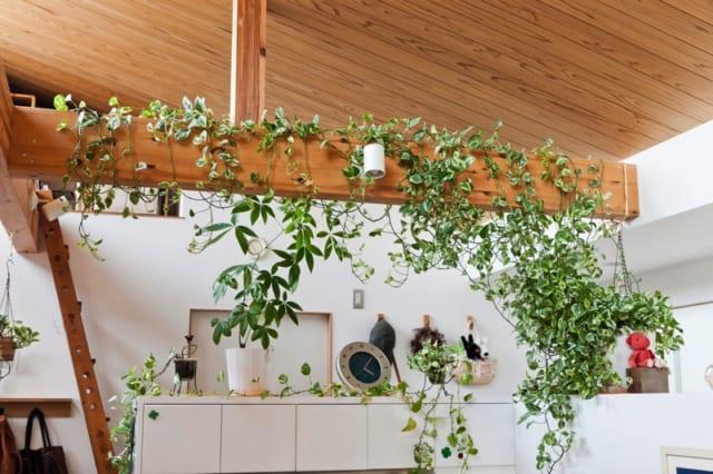 2階 LDK/テレビ台の上の梁にはグリーンが絡まり、木と緑のナチュラルなインテリアが心を和ませる。写真奥の壁中央にある小さな丸いものは24時間換気システムの換気口。要所要所に設置されており、気密性の高い住宅でも常にきれいな空気を保つ