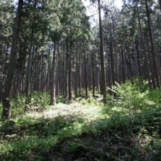 県産材の森/県産材を使う「地産地消」が、地元の自然や環境を守ることにつながるのだという
