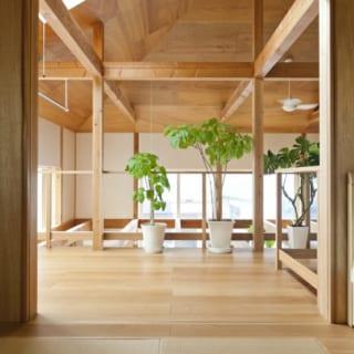 窓からの光や風を受けて、生命力旺盛な植物たち。木の家には鮮やかなグリーンがよく映える。