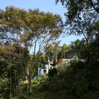 斜面下、南西側から望んだS邸。緑豊かな自然とS邸をかしの木がつなぎ、家を周辺環境となじませている
