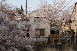 桜並木の絶景を満喫できる2階ダイニングキッチンが一家団欒の場