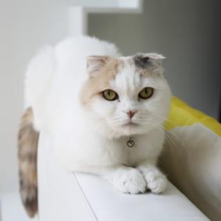 2匹の愛猫が快適に暮らせることも、S邸の家づくりの大切なテーマの1つとなった