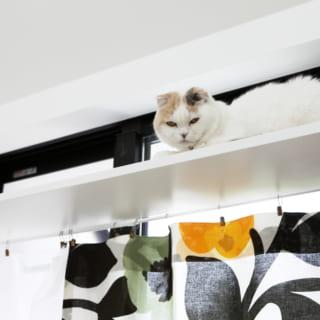 LDKのキャットウォークでくつろぐ愛猫。家の中にいてもストレスがたまらない