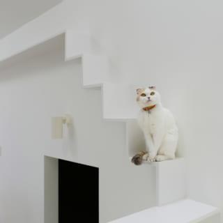 リビングには猫たちのためのキャットウォークを巡らし、家の中でも猫たちが楽しめるように作り込まれている