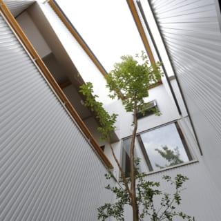 1階から見上げた中庭の様子。ひめしゃらの木がアクセントとなっており、リビングや寝室からもこの木を眺めることができる