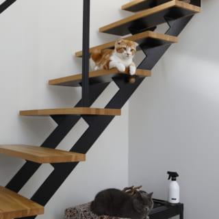 階段は、猫ちゃんたちのお気に入りスポット。階段下の水槽にはトカゲさんとヘビさんも