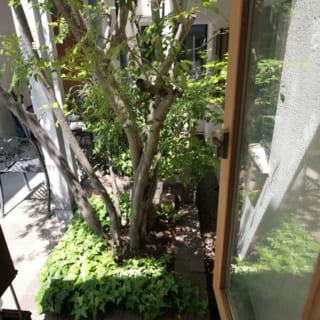 応接ルームのテーブル脇の小窓。ほかの部屋の窓と視線がぶつからず、それでいて植込みの緑を眺められる配置