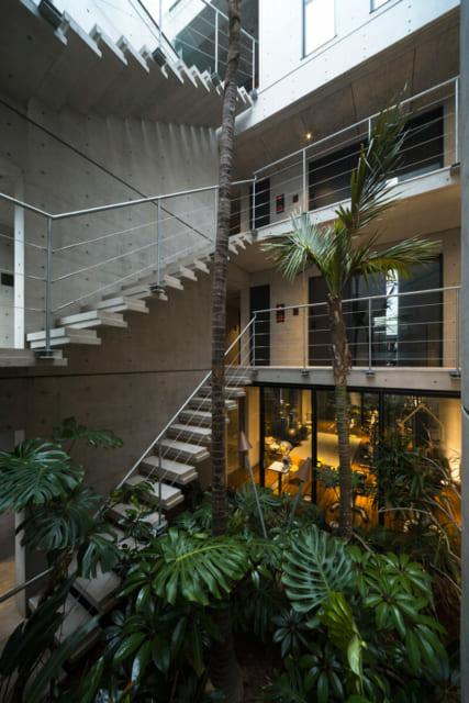 中庭には植物を配置し、自然が感じられる空間に。背の高い木は建物の建築前に設置したという