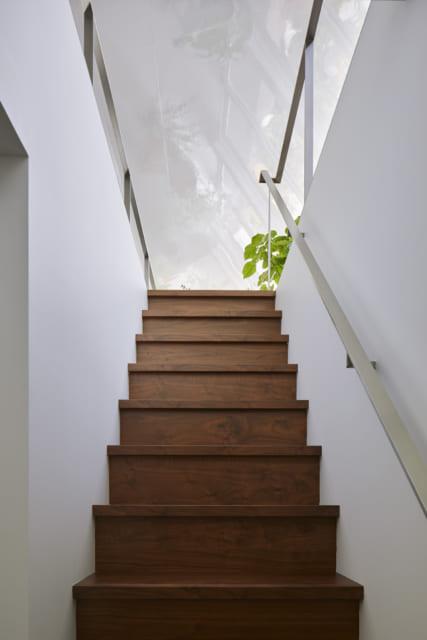 階段入口は天井しか見えないように設計。のぼっていくと2階の緑が徐々に視界に入ってきて、期待が高まる