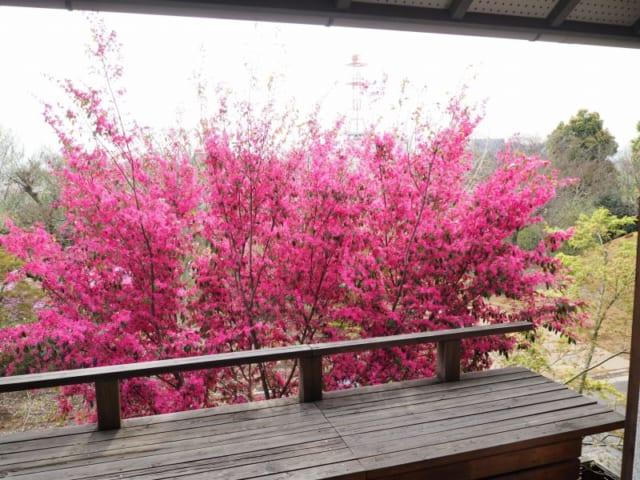 暮らし始めてから10年以上の月日が経過し、植栽も大きくなった。春はピンクのトキワマンサク、夏はヤマボウシなど四季折々の木々を2階から眺められる。ウッドデッキも年月を重ね、雰囲気ある表情になっている